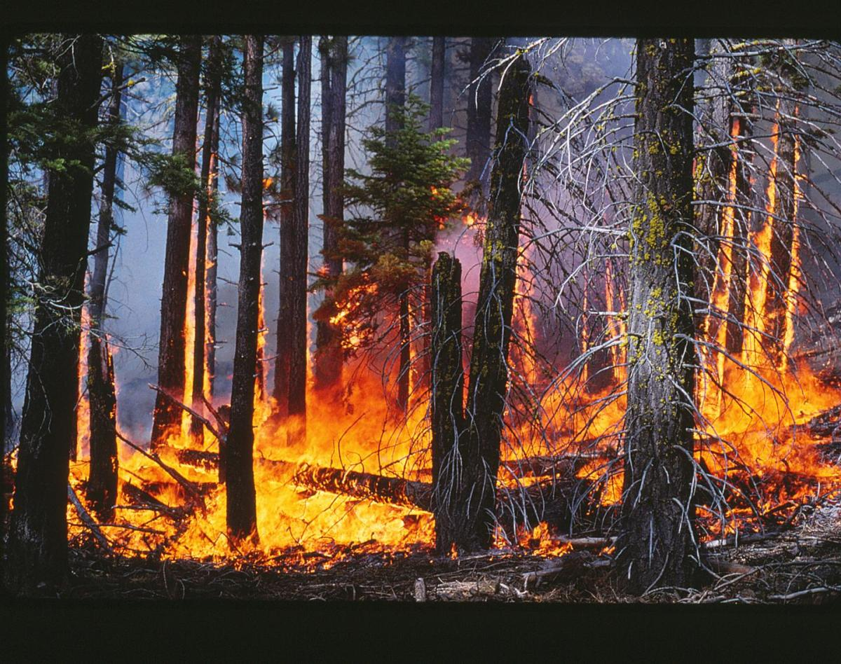 Finding: Forest fires in Sierra Nevada driven by past land use – not climate